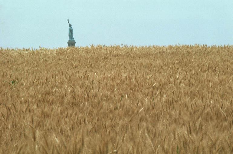 wheatlib-xl.jpeg