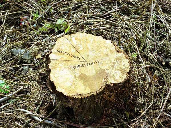 tree_stump.jpg