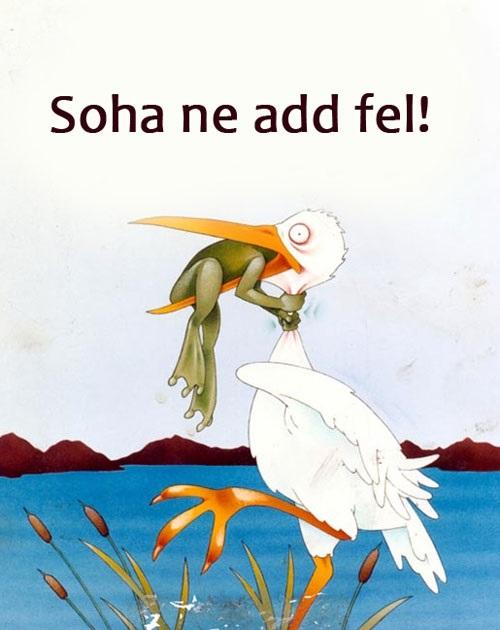 soha-ne-add-fel1.jpg