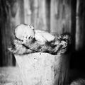 Máté   /   újszülött fotózás