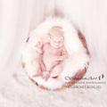 Szibella   ♡    családfotó és újszülött fotózás