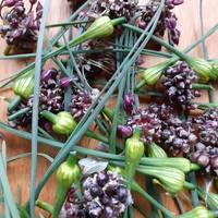 Hagymabimbók és éretlen gyümölcsök