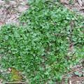 Kora tavaszi gyűjtés a kopárnak látszó kora tavaszi erdőben