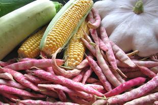 Bab, kukorica, és tök: a három nővér Észak-Amerikában