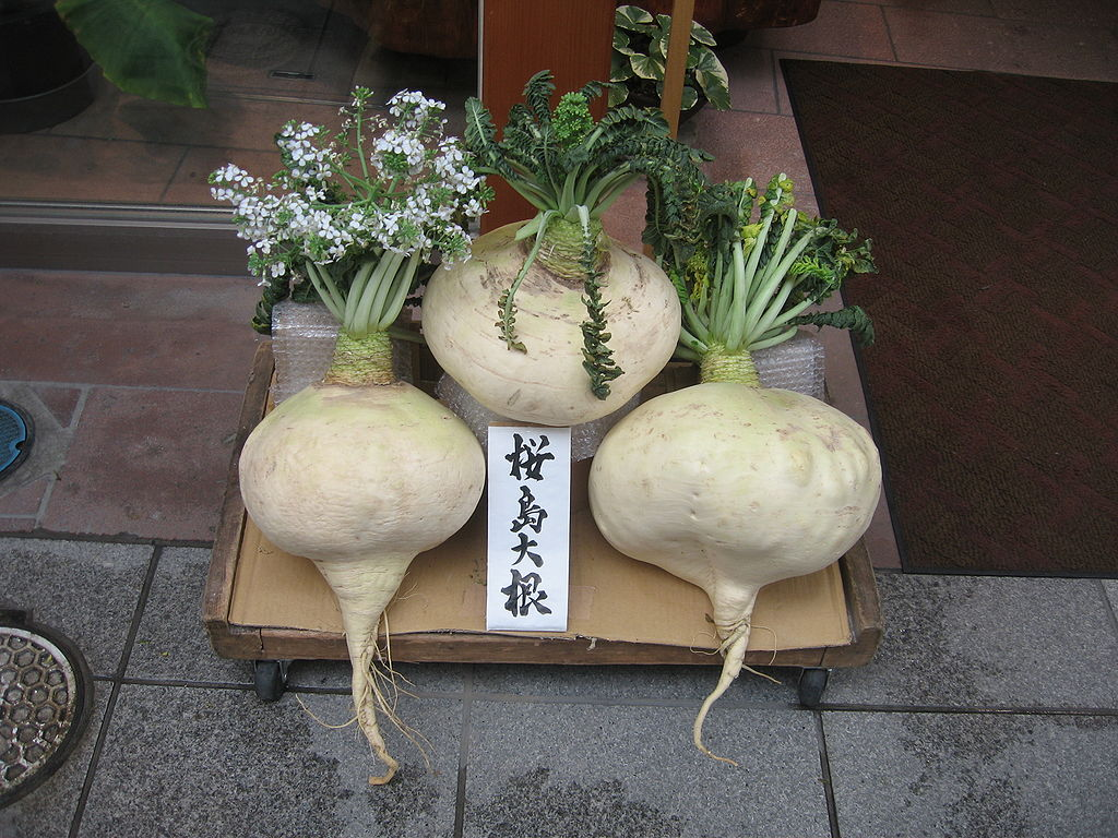 sakurajima_daikon.jpg