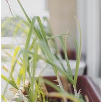 KonyhaKert - veteményesem így nőtte ki magát balkonládából kiskertté