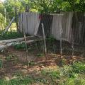 KonyhaKert - Képes beszámoló a kert kicsinosításáról