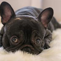 yippyupp: Erdőszéli kutyatelep meséi