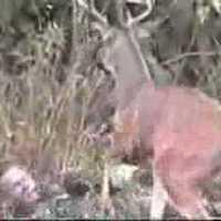 Erdei történetek - A szarvas és a vadász