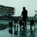 Az alvilágnak nincs romantikája - Dogman - Kutyák királya