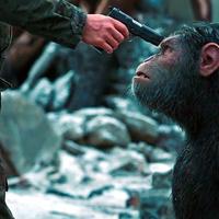 Érzelmek viharában - Majmok Bolygója: Háború