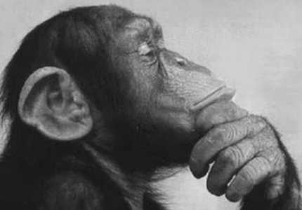 Monkey_Rodin-thinker.png