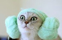 macskafül.jpg