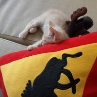 Macska- és kutyatartás