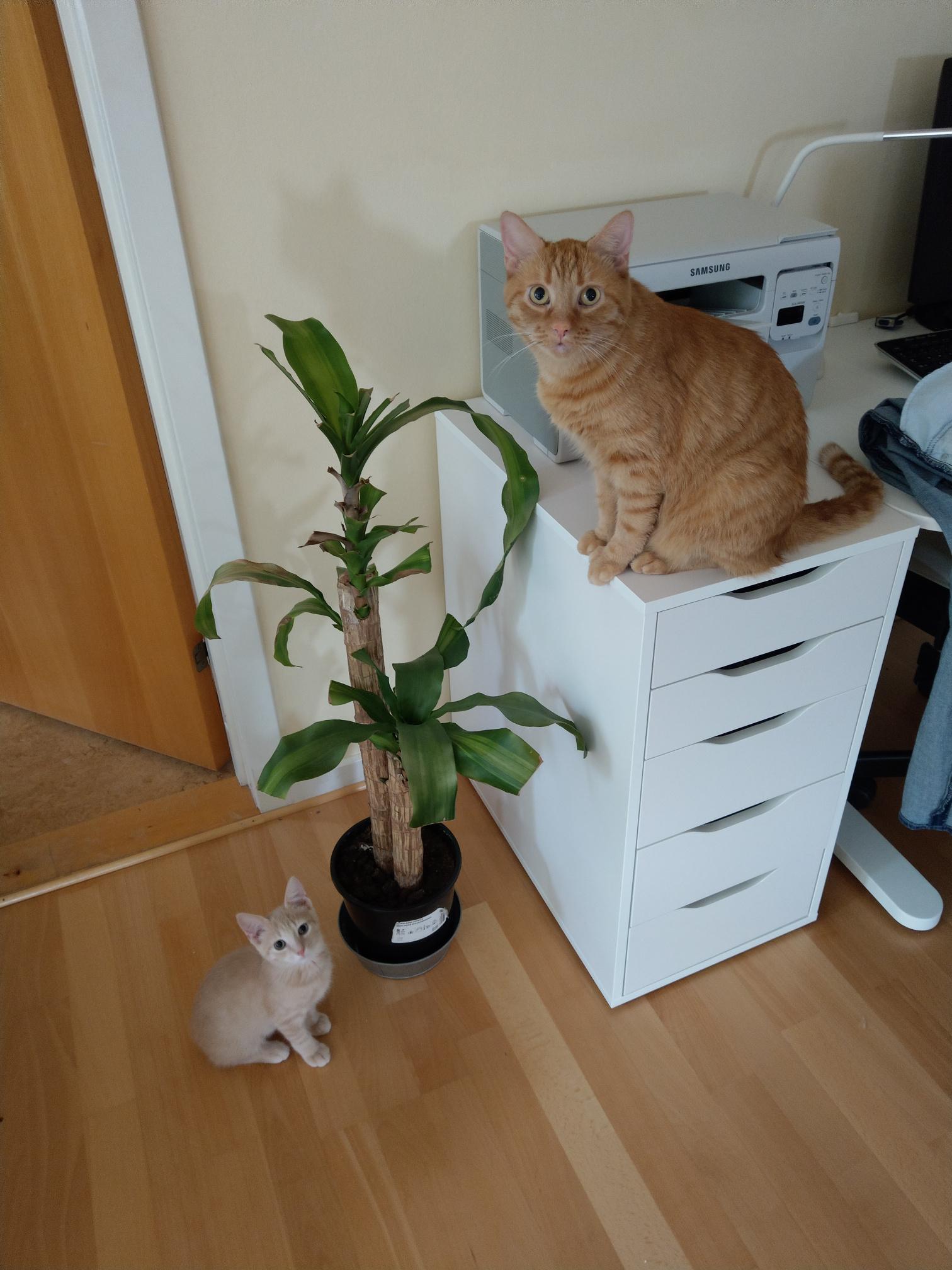 A növény azért néz így ki, mert a macskák hobbija az, hogy darabokat harapnak ki belőle, majd elegánsan melléköpik....