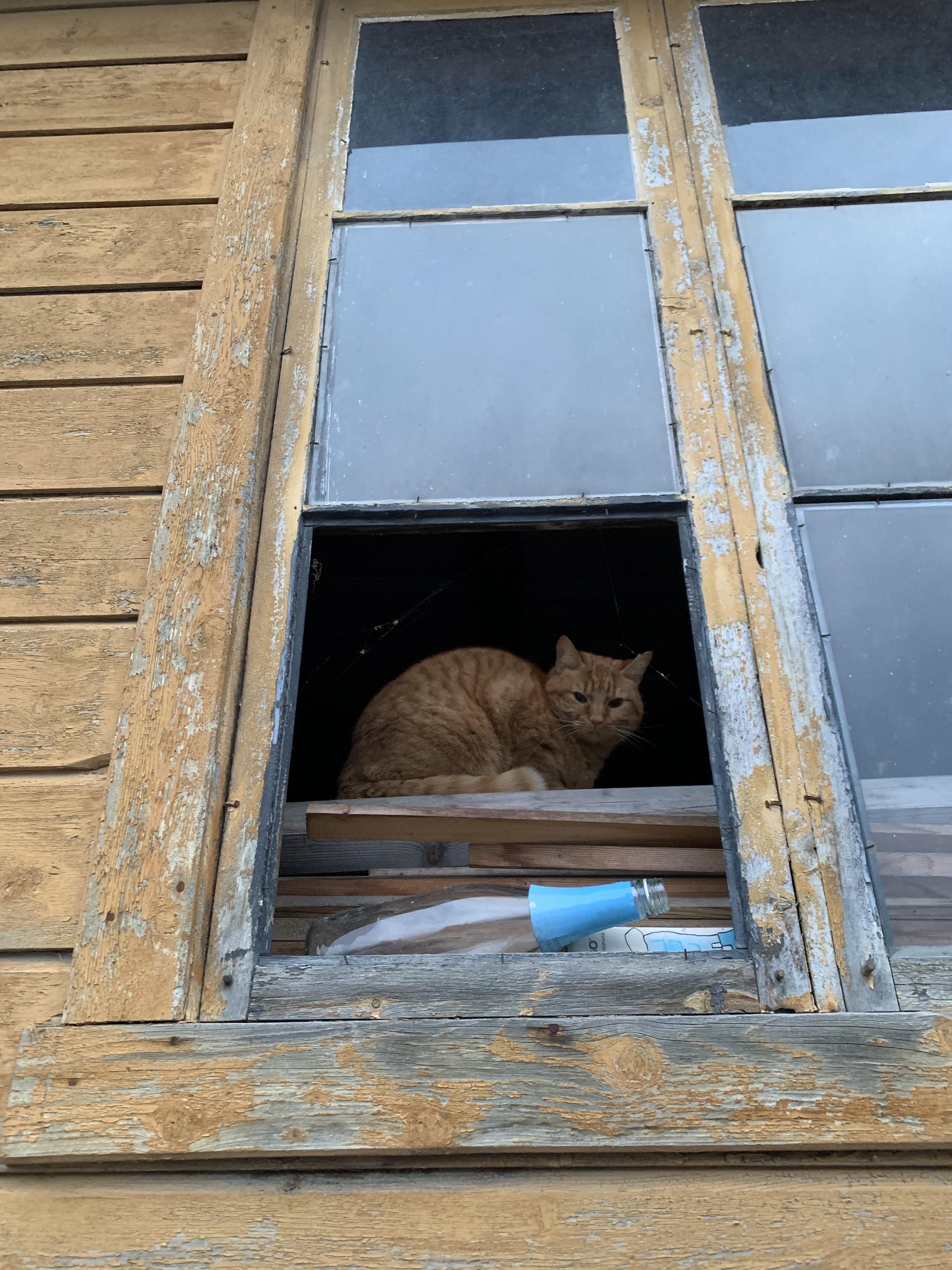 Norvégiában is vannak vörös macskák :)