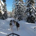 12 ok, amiért érdemes télen Svédországba utazni