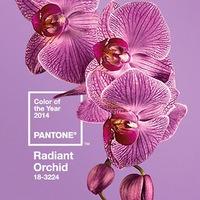 2014 év színe: orchidea lila