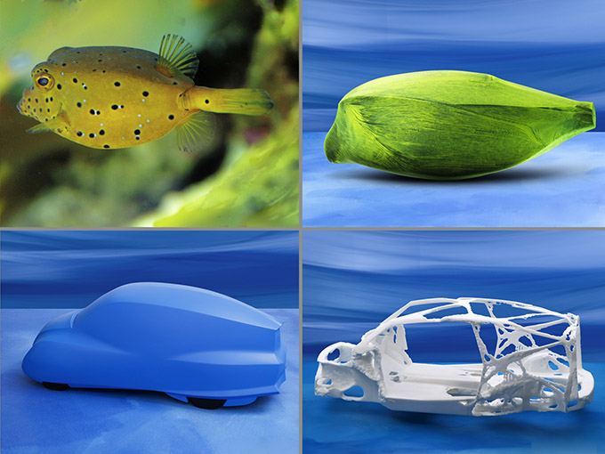 boxfish-mercedes-comparison.jpg