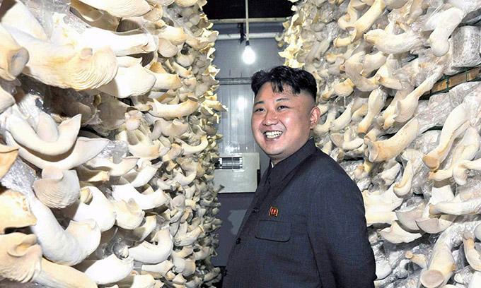 gomba-sportital-eszak-korea.jpeg