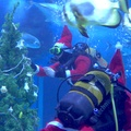 Videó: A Mikulás a cápákat is megajándékozta a Tropicariumban