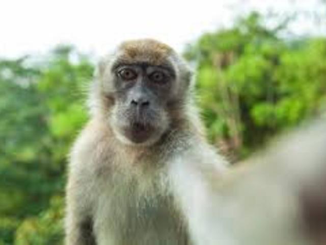 Majom selfi-k miatt perel a PETA