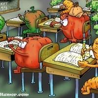 Salátabár vizsga ...