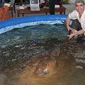Megfogták minden horgászidők legnagyobb édesvízi halát