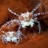 Az év legjobb víz alatti természetfotói