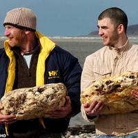 Félmillió fontos bálnarókát találtak kutyasétáltatók