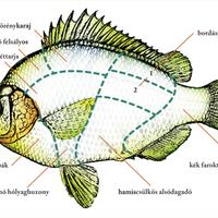 Vágófish