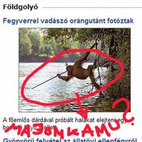 Internetes minibotrány? - Majomkamu vagy tudományos szenzáció a horgászó orángután