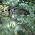 Újra él a Csörnöc-Herpenyő patak