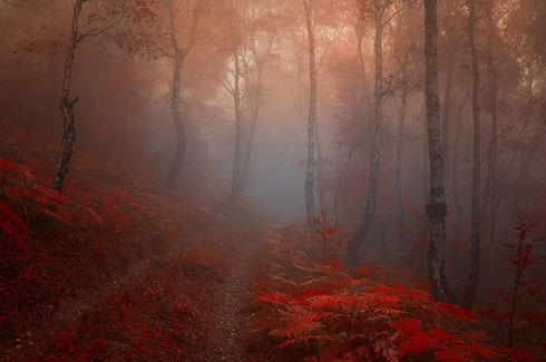 road_into_my_heart__by_janek_sedlar.jpg