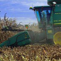 Meddig kukoricázhatunk még a termőfölddel?