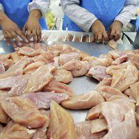 Haldokló csirkéket fogyasztunk?