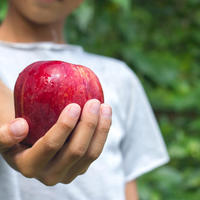 A hazai iskolai gyümölcsök közel háromnegyede tartalmaz vegyszermaradványokat