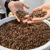 A kávé túl értékes ahhoz, hogy kipusztuljon