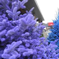 Színesebb karácsonyt varázsolnak egy kis festékkel