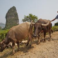 A kínai falu, ahol titokban kezdték el a kapitalizmust