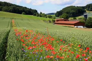 Vadvirágok menthetik meg a gabonánkat