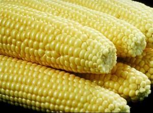 Kukorica-.jpg