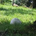 Variációk a pöfeteg gombára