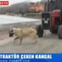 Erős a kutya?