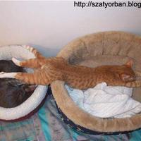 Pihenés 2 - tündérbogyesz