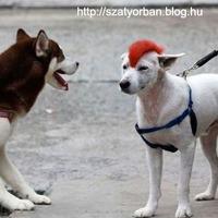 Raj kutya - tündérbogyesz