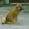 Az örök kutya macska párharc - tündérbogyesz