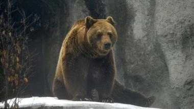 A medve, amely elfeledtette velünk egy hétre, hogy milyen elképesztő országban élünk