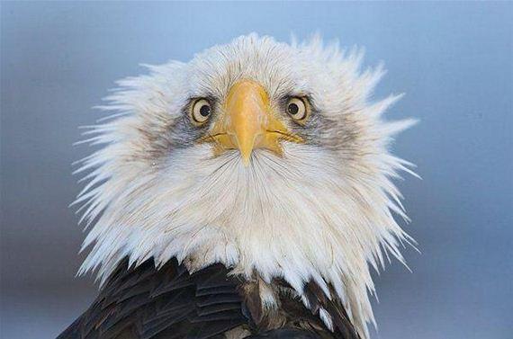 shocked-eagle.jpg