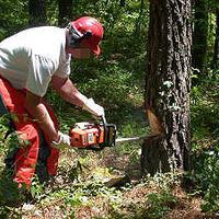 Kisstihlű tolvajok lopják a fát